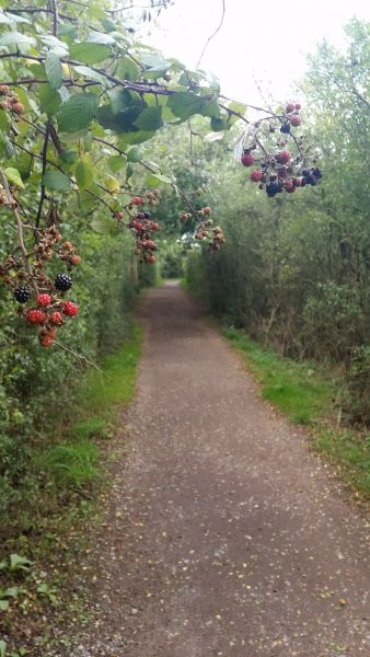 The Path to Wivenhoe